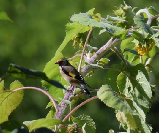 uccellino-blog